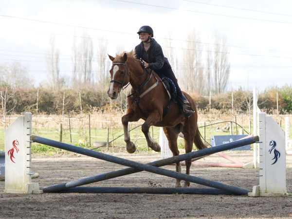 riding lesson horse jumping
