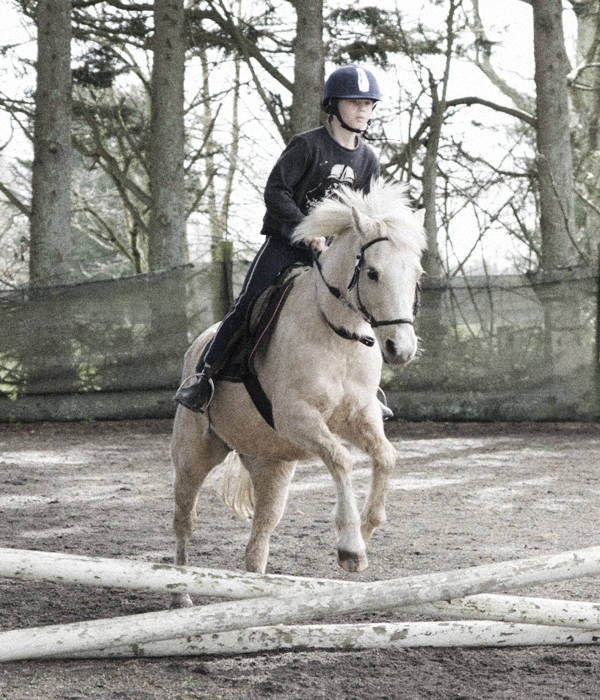 white horse jumping low